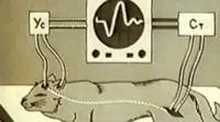 02.Jelektrofiziologija CNS